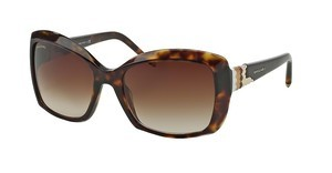 Bvlgari BV8133 504/13 BROWN GRADIENTHAVANA